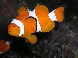 Consejos para elegir un pez sano