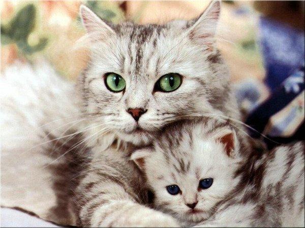 Los beneficios del ronronear de los gatos para tu salud