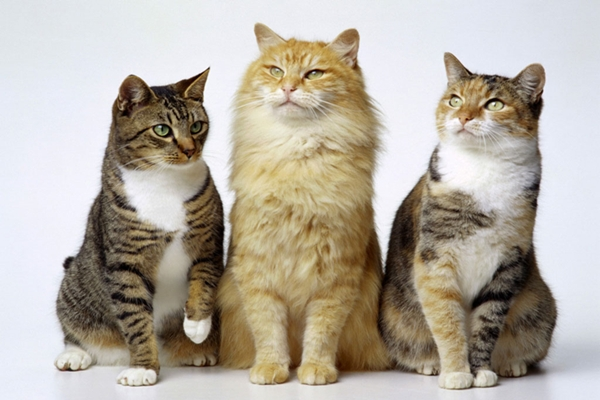 Agresividad entre gatos que conviven