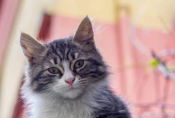 como-hacer-a-un-gato-feliz-consejos
