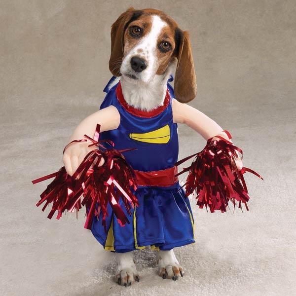 disfraces-caseros-para-mascotas-halloween-disfraz-de-animadora
