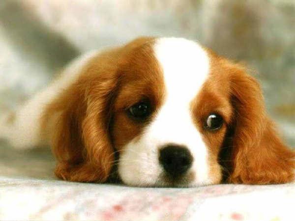 Los gestos corporales más comunes de tu perro y qué significan.