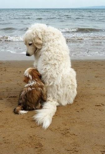 nombre perros ingles