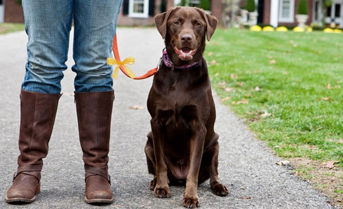 Los perros y su listón amarillo.