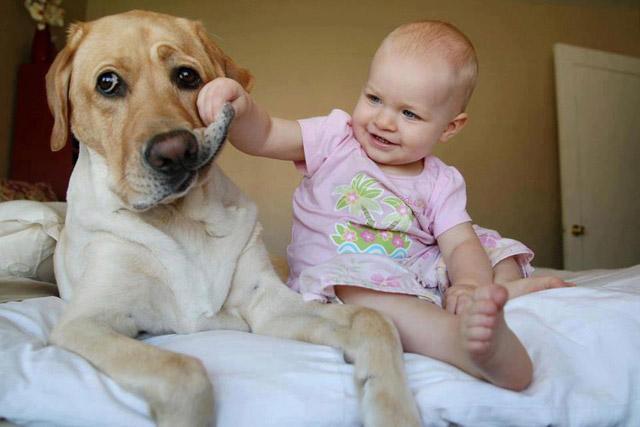 presentar_bebe_perro