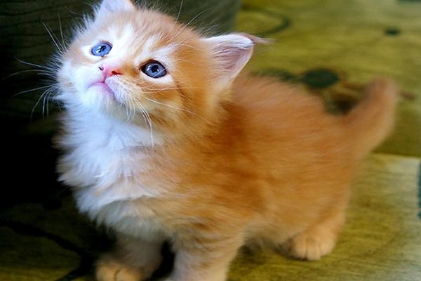 Reglas básicas de educación felina