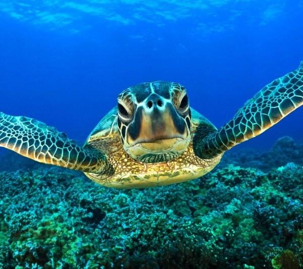 Especies de animales marinos