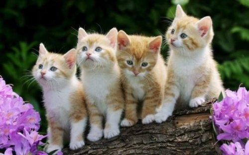 Consejos para gatitos recién nacidos