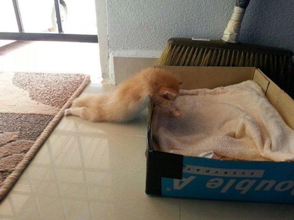 fotos-de-gatos-graciosos-gato-dormido-fuera-de-caja