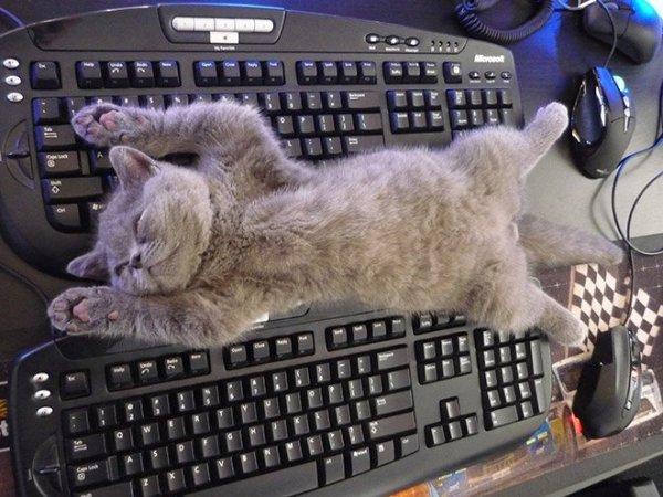 fotos-de-gatos-graciosos-gato-durmiendo-encima-de-teclado