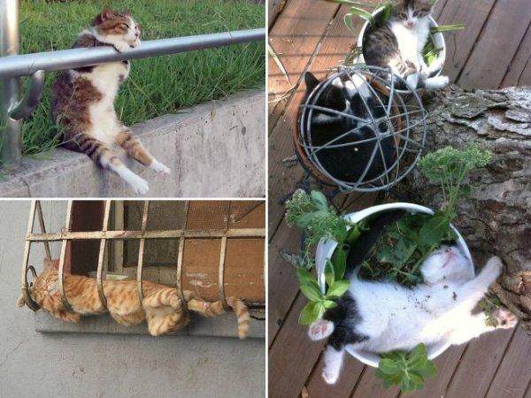 fotos-de-gatos-graciosos-gatos-dormidos