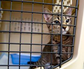 gato-viajando