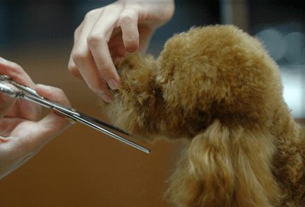 Cómo cortar el pelo del perro