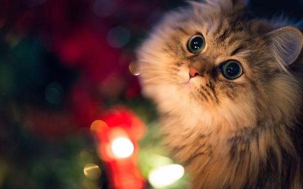 la-navidad-y-las-mascotas-cuidados-mascotas-y-ruidos