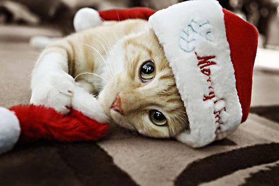 la-navidad-y-las-mascotas-cuidados
