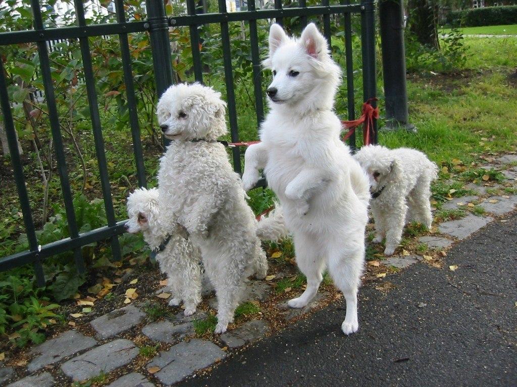 nombres-curiosos-y-extranos-para-mascotas-perros