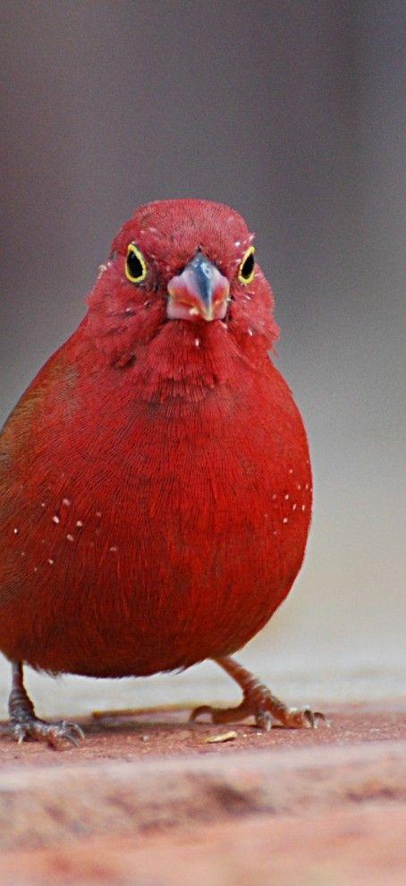 nombres mascotas aves
