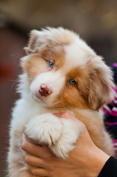 nombres populares para perros