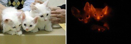 071213_clonedcats_hlrg_930a