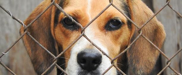 Esta Navidad, más de 4.400 gatos y perros sin hogar tendrán una comida navideña especial