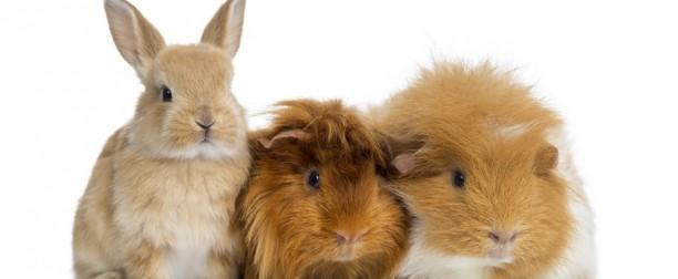 Causas de alopecia o clareo en el manto de pequeños mamíferos. II parte