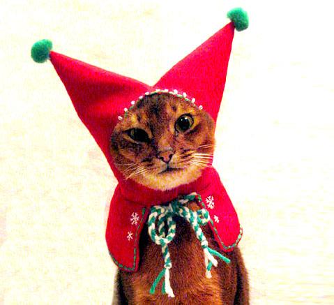 disfraces-de-navidad-graciosos-para-perros-y-gatos-fotos-disfraz-de-gato-capucha-roja