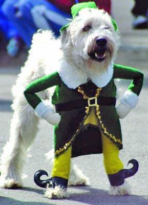 disfraces-de-navidad-graciosos-para-perros-y-gatos-fotos-disfraz-de-perro-de-elfo
