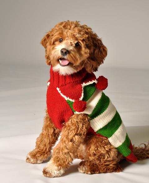 disfraces-de-navidad-graciosos-para-perros-y-gatos-fotos-disfraz-de-perro-jersey-navideño