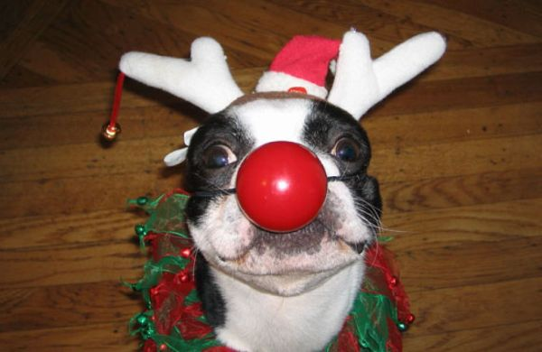 disfraces-de-navidad-graciosos-para-perros-y-gatos-fotos-disfraz-perro-nariz