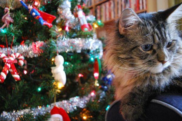 postales-de-animales-para-navidad-2015-como-hacer-tu-propia-postal