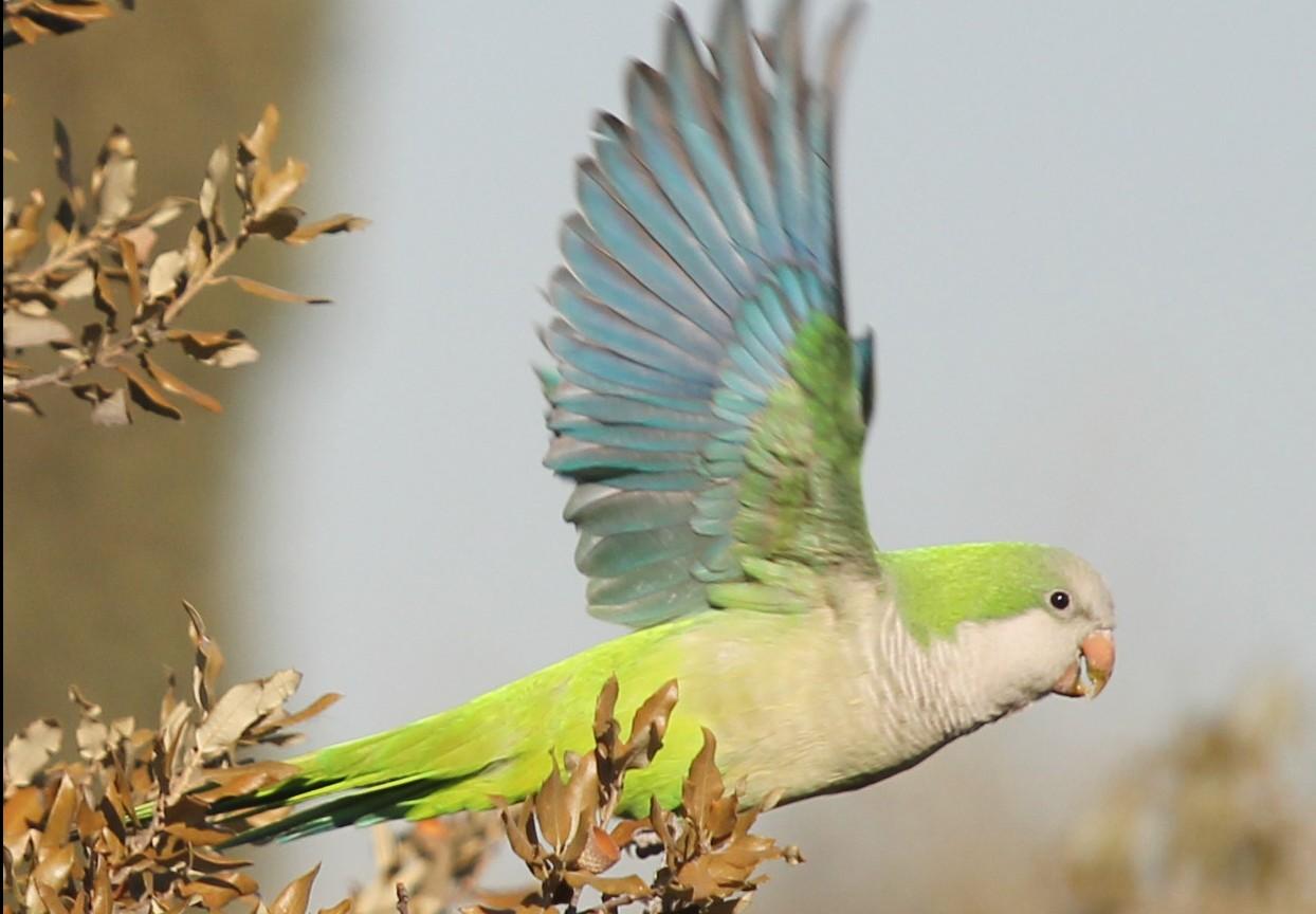 El metabolismo único de las aves
