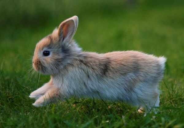 nombres-para-conejos-machos