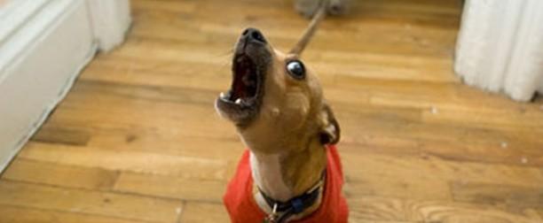 Ejercicios para que tu perro no ladre cuando llamen al timbre