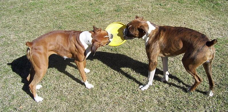 Consejos para fortalecer la relación entre perros que se llevan mal