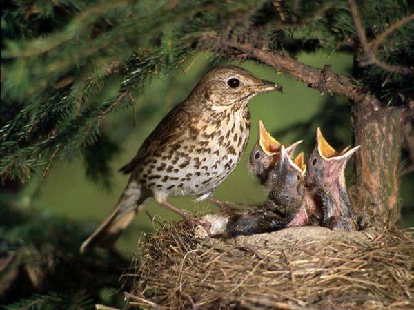 aves curiosidades