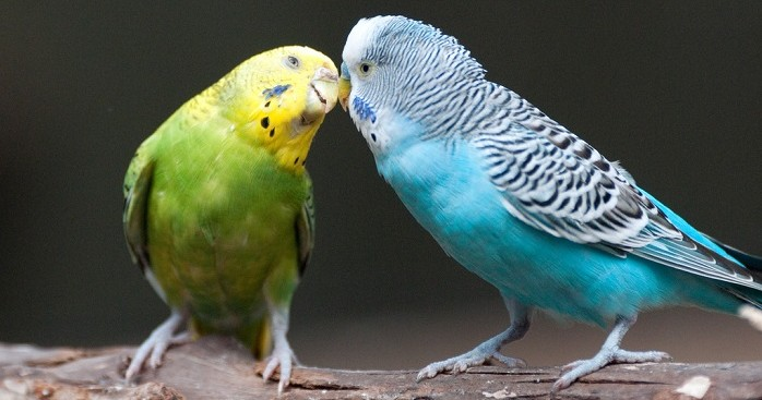 El proceso de reproducción de las aves