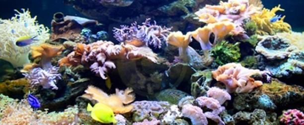 La calidad del agua para el mantenimiento de los corales