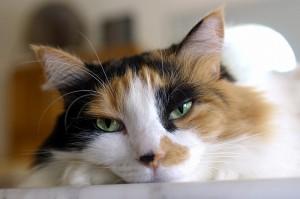 gatos gata triste sueño