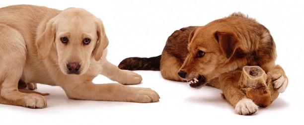 Si tu perro te gruñe dale las gracias
