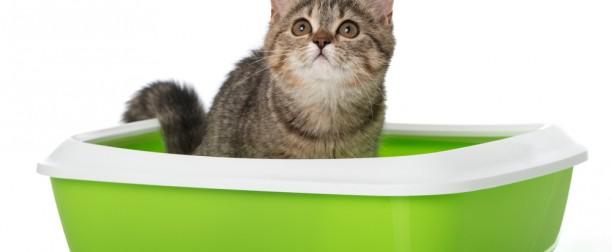 Enseñar al gato a usar el arenero