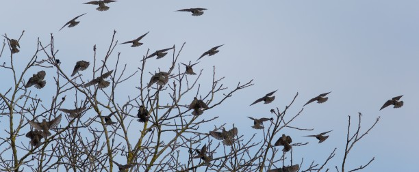 El Birdwatching en primavera