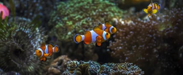 Convivencia y sociabilización en el acuario