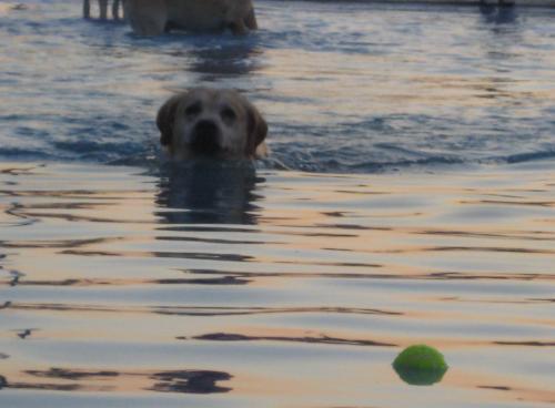 perro-pelotabegona-sastre.jpg