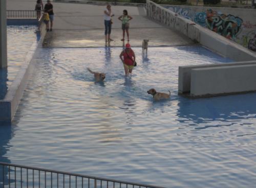perros-en-piscinabegona-sastre.jpg