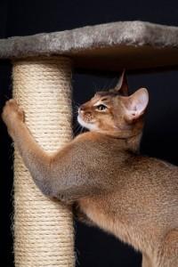 gato-rascando-rascador