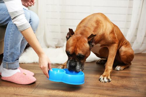 Que el perro no devore la comida