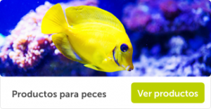 Banner_Peces_1100