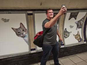 london-gatos