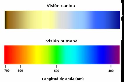 visión canina