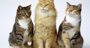 consejos y trucos para los dueños de gatos